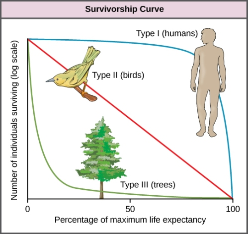 survivorship curve